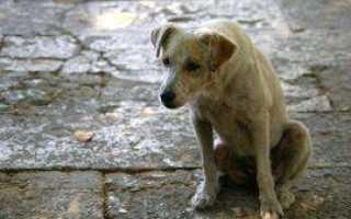 Заговор на пропавшее животное — самый сильный (текст)